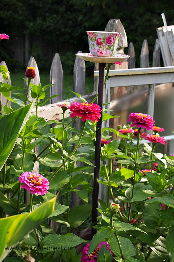 teacup birdfeeder in  clump of zinnias