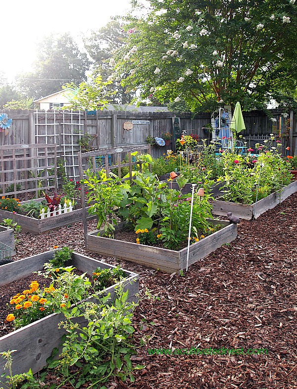 A Cultivated Nest Raised Bed Vegetable Garden