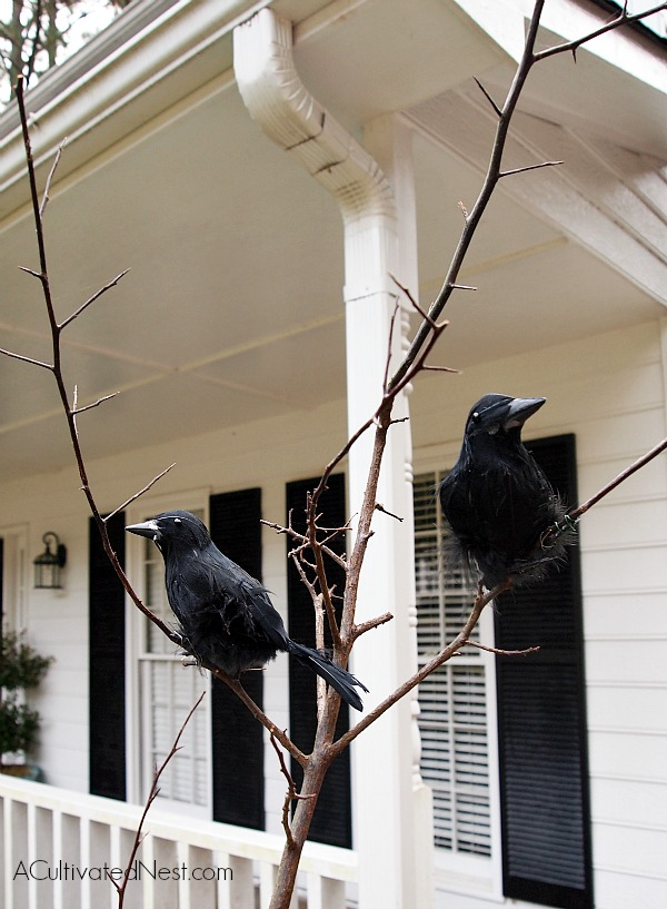 Halloween planter idea - wire black birds to branches that are planted into a fall planter