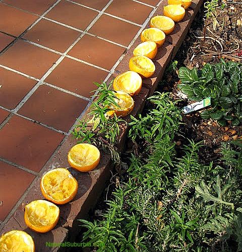 re-use orange peels as natural firelighters