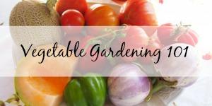 vegetable-gardening-101