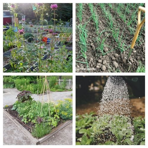 16 Resources for the Gardening Beginners- New to gardening? Here are 16 gardening articles every beginner gardener needs to read! | how to start a vegetable garden, beginning gardening, tips for new gardeners, #gardeningTips #gardening #vegetableGardening #ACultivatedNest