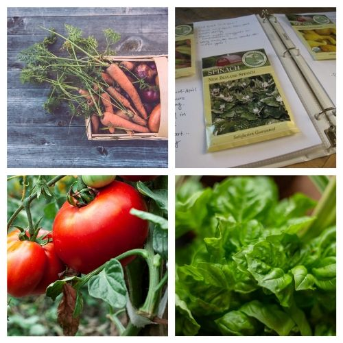 16 Resources for New Gardeners- New to gardening? Here are 16 gardening articles every beginner gardener needs to read! | how to start a vegetable garden, beginning gardening, tips for new gardeners, #gardeningTips #gardening #vegetableGardening #ACultivatedNest