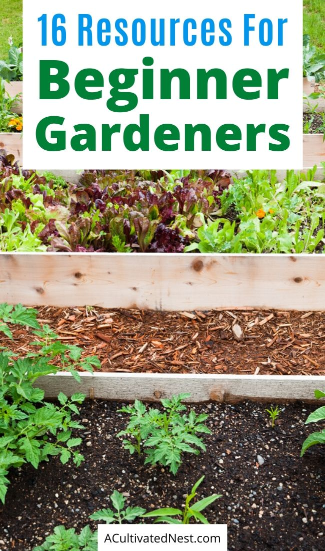 16 Resources for the Beginner Gardener- If you want to grow your own food, but don't have any experience gardening, then you need to check out these 16 helpful resources for the beginner gardener! | how to start a vegetable garden, beginning gardening, tips for new gardeners, #garden #gardeningTips #backyardGarden #vegetableGardening #ACultivatedNest