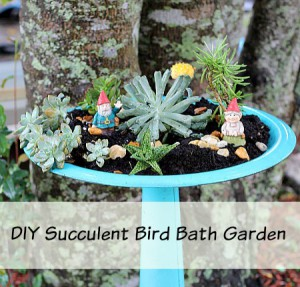Easy to Make Bird Bath Succulent Garden