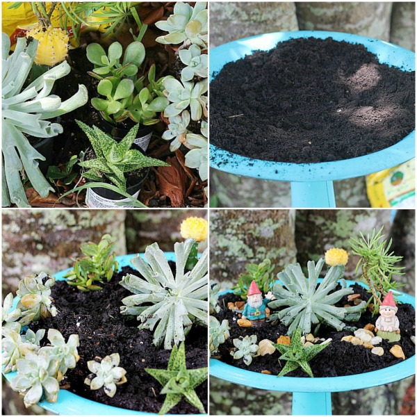How to make a bird bath succulent garden