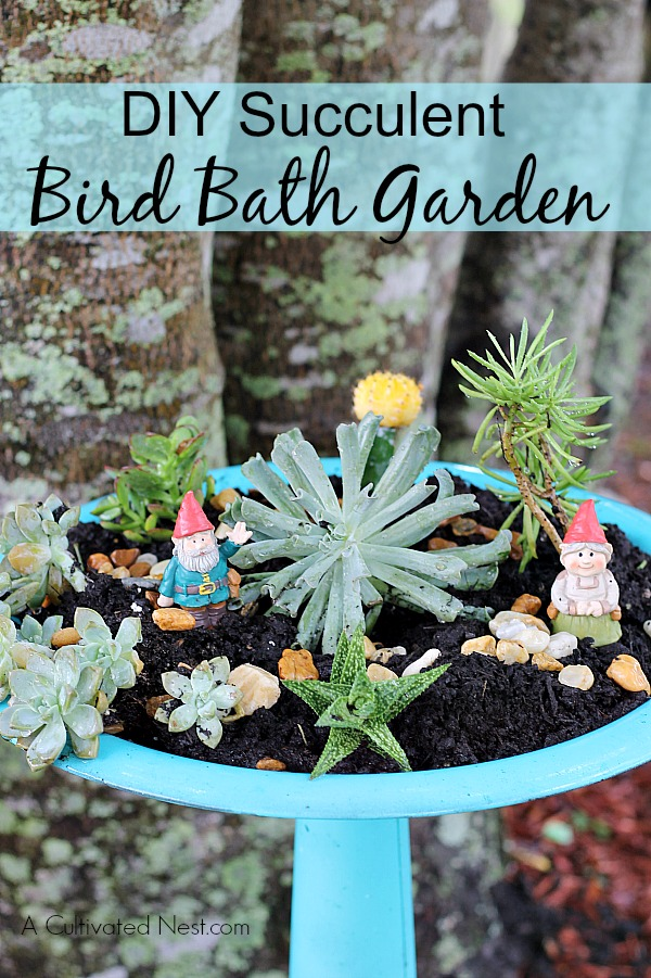 DIY Succulent Bird Bath Garden