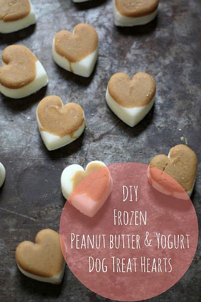 15 Homemade Dog Treats | DIY Homemade Peanut Butter Yogurt Dog Treats