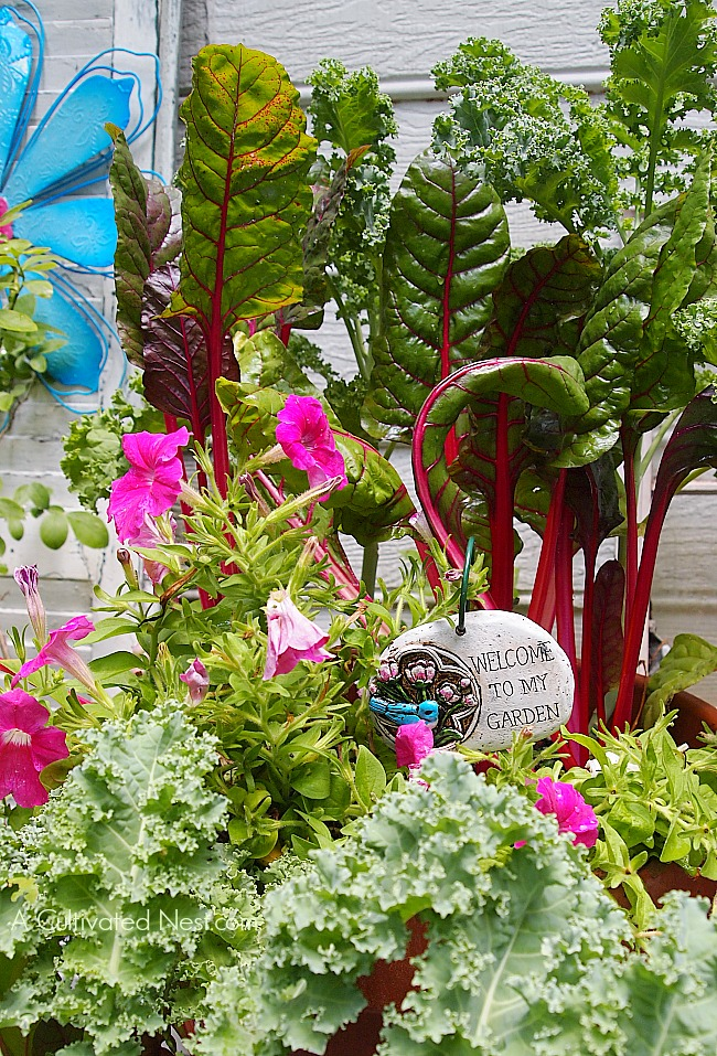 My Container Vegetable Garden – What to Plant in My Vegetable Garden