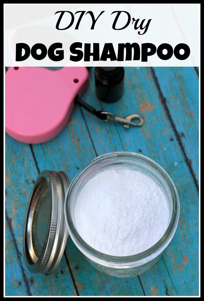 Need to freshen your dog up, but don't want to give them a full bath? Then you need to use this DIY dry dog shampoo!