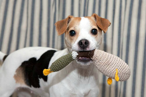 Crocheted Duck Dog Toy