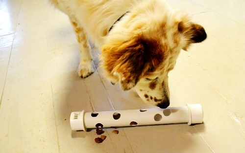 Interactive Feeder Homemade Dog Toy