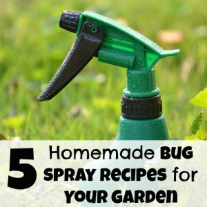 5 Homemade Bug Spray Recipes for Your Garden