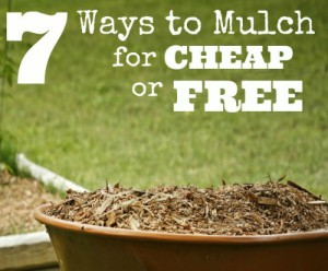 7 Ways To Mulch For Cheap Or Free