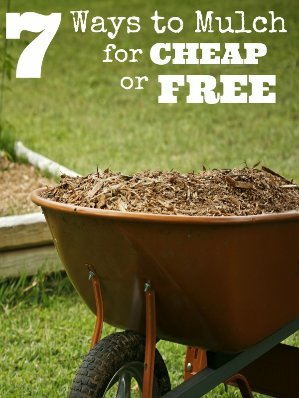 Ways to Mulch For Cheap Or Free - Do you need to apply a layer or two of mulch to your garden or landscaping? If you need a great deal of mulch or perhaps you are working on a budget this year, you might be wondering how to get the mulch you need for less. Take a look at these great ideas for free or cheap mulch!