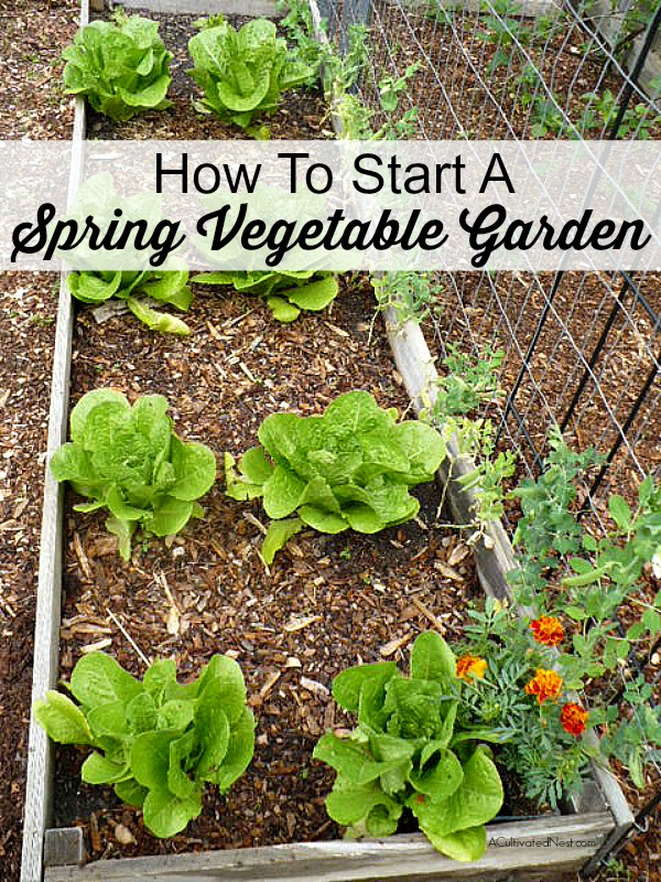 Spring is officially here, so it's time to start thinking about how to start a spring vegetable garden!