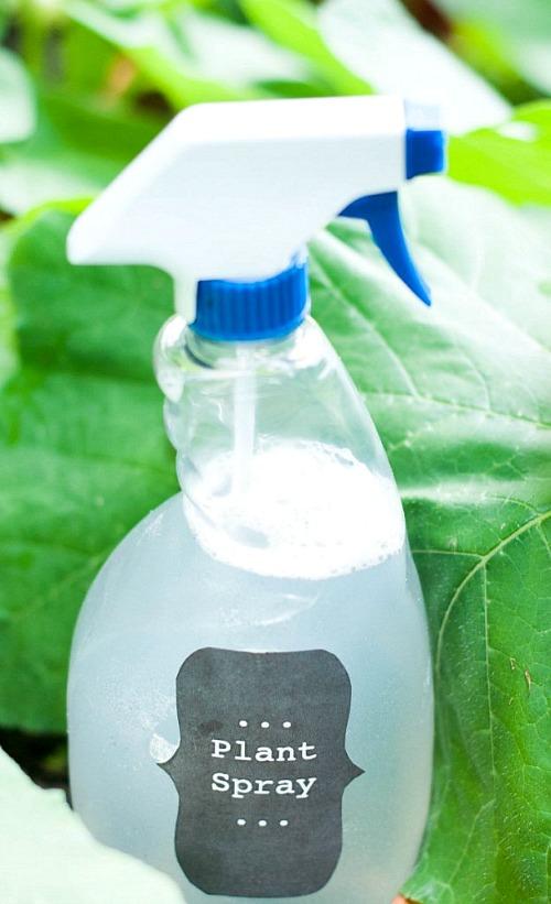 5 Homemade Bug Spray Recipes for Your Garden
