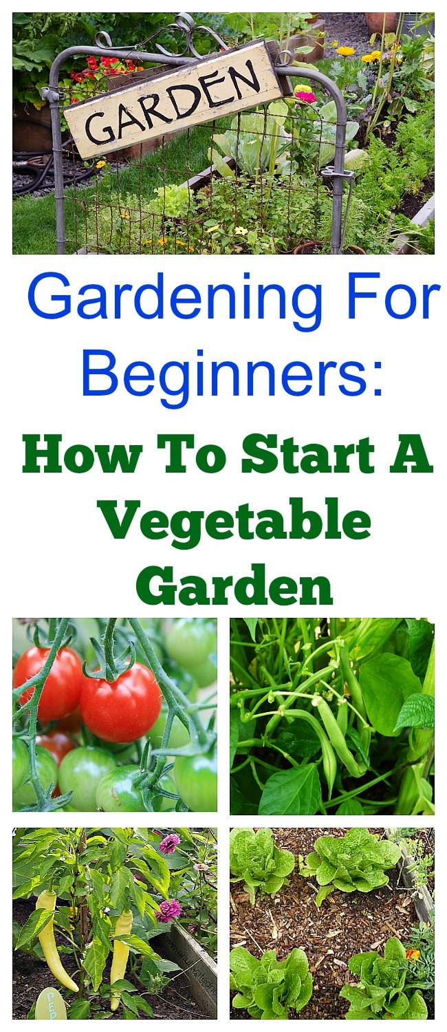 How To Start a Spring Vegetable Garden- Would you like to have a vegetable garden this year? Here's a quick start guide to starting a spring vegetable garden that's great for beginners! If you would like more in-depth information about vegetable gardening, be sure to check out my Gardening 101 Series! | grow your own food, veggies, start a garden in your backyard #gardening #garden #vegetableGardening #growingFood