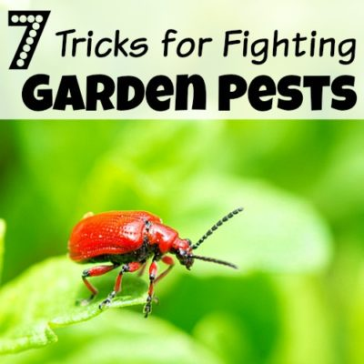 7 Tricks For Fighting Garden Pests