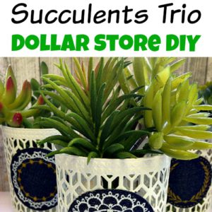Succulents Trio- Dollar Store DIY