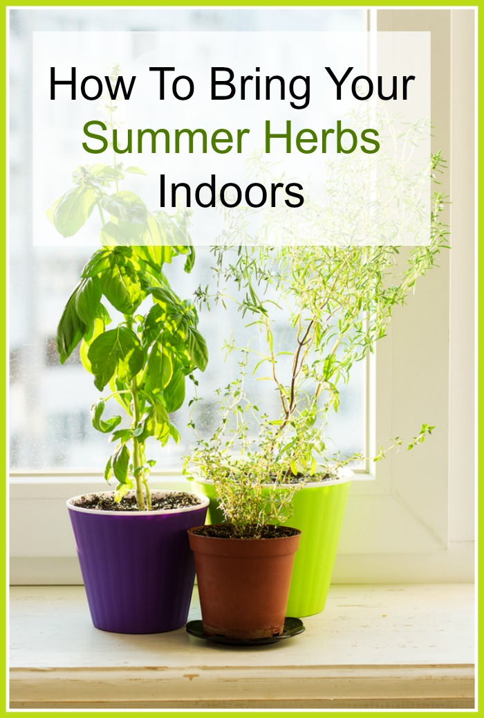 Want to enjoy fresh, flavorful herbs all winter long? Then you'll like these tips on how to bring your summer herbs indoors!