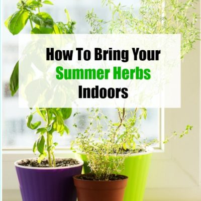 How to bring your summer herbs indoors
