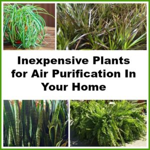 Great Inexpensive Houseplants for Air Purification