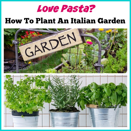 How To Plant An Italian Garden. Love pizza or Italian food? Imagine that you made them with fresh organic vegetables & herbs right from your own garden! growing herbs, container herb garden, DIY garden projects