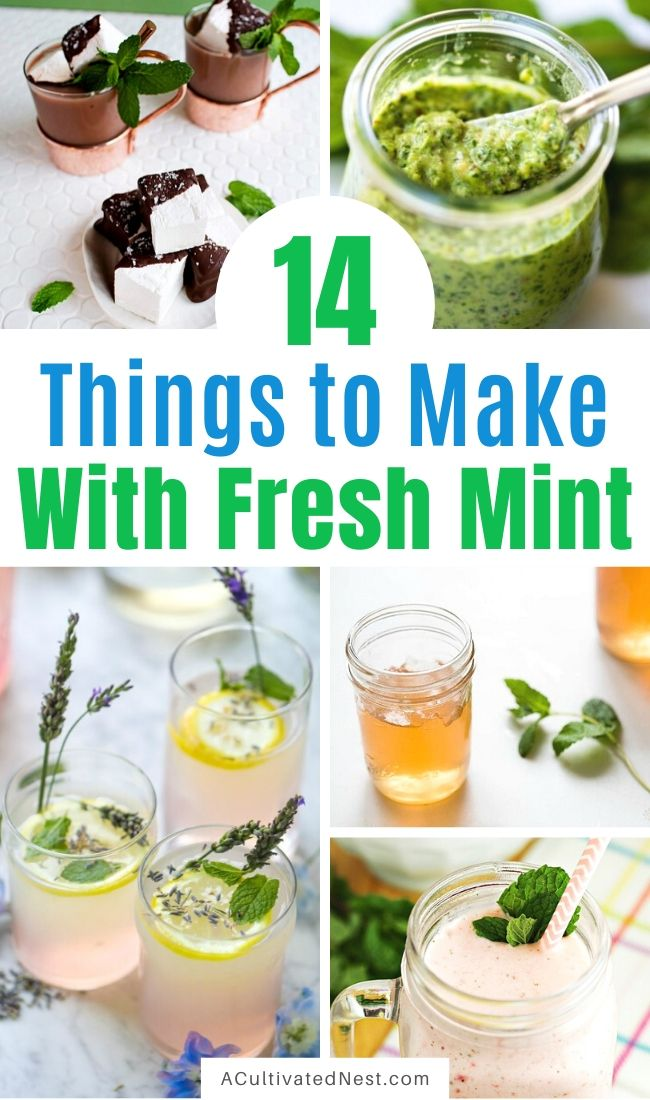 14 Things To Make Using Fresh Mint- If you have extra fresh mint from your herb garden or the grocery store, here are some tasty ways to put it to use! | #herbs #recipe #food #mint #ACultivatedNest