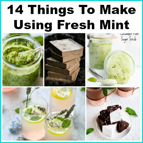 14 Things To Make Using Fresh Mint - Mint is one of the easiest plants to grow! Today I'm sharing 14 creative ways to use fresh mint. How to store fresh mint, what to do with fresh mint, mint leaves, mint recipes, benefits of mint, herbs, mint beauty recipes