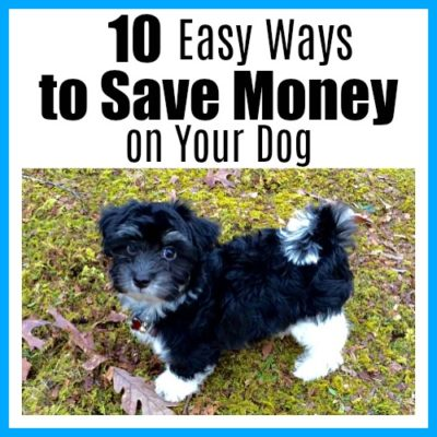 10 Easy Ways to Save Money on Your Dog