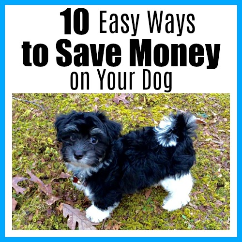 10 Easy Ways to Save Money on Your Dog- Dogs make wonderful additions to any family. But they're not necessarily cheap! Luckily, there are ways to have a happy, healthy dog, and for less. Take a look at these 10 easy ways to save money on your dog! These frugal pet tips are easy to implement, and can save you tons! | pet ownership, getting a dog, puppies, Havanese, frugal dog owners, how to spend less on pet expenses, #dog #puppy #moneySavingTips #frugalLiving