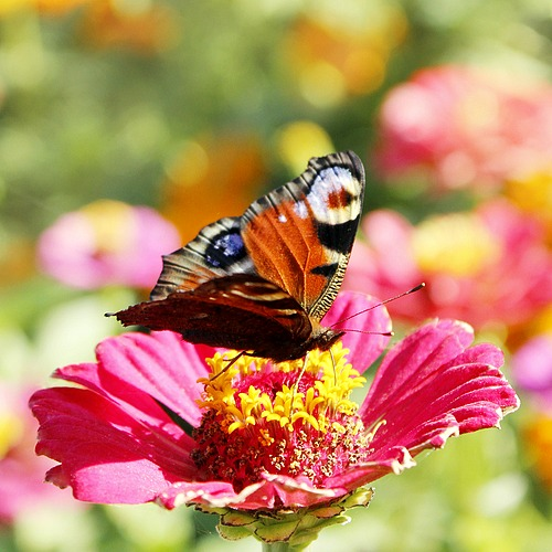 How to Build a Butterfly Garden- It's really easy to start a butterfly garden! All butterflies need is food, water, and shelter. Take a look at this guide on how create a butterfly garden in your yard! It's easy, and a lot of fun! | #butterflyGarden #gardening #garden #butterflies #butterfly #gardeningTips