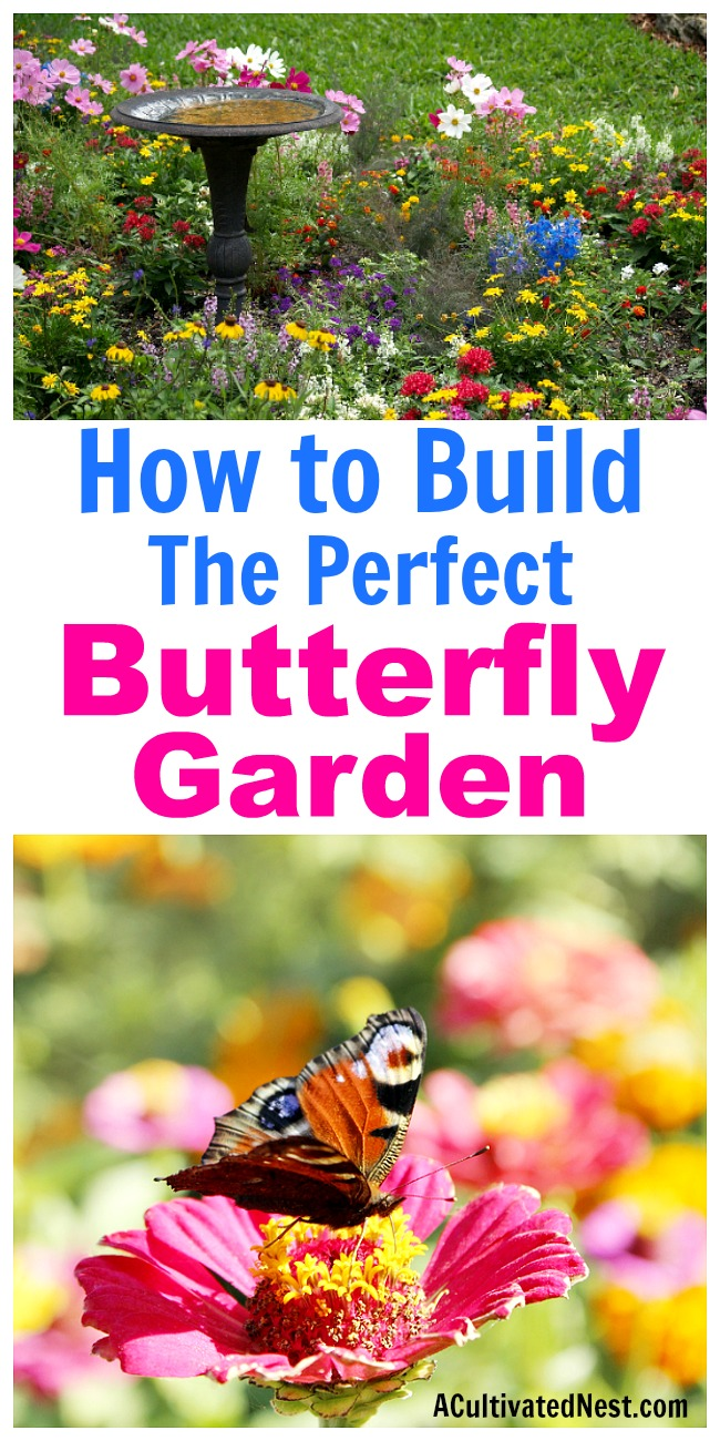 How To Build A Butterfly Garden  Itu0027s Really Easy To Start A Butterfly  Garden!
