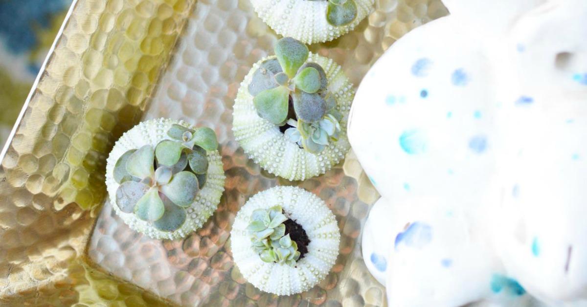 DIY Sea Urchin Succulent Planters