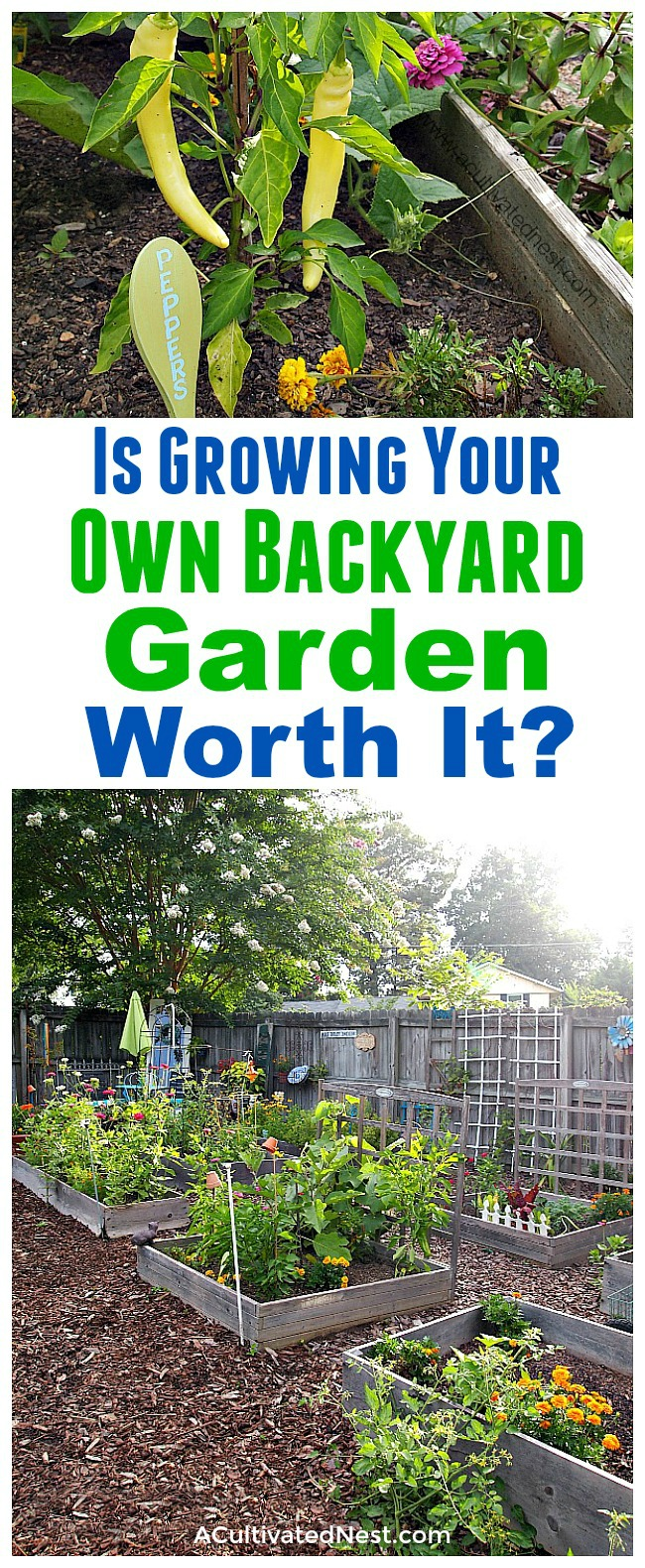 Is Growing Your Own Backyard Garden Worth It?- Gardening is a great way to grow your own all-natural food. But is it worth the money and time? I cover the expenses and benefits of growing your own backyard garden, and share my handy tips for how to start a garden the frugal way! | ways to save money on your garden, how to start a garden for cheap, frugal gardening tips, gardening pros and cons #gardening #growYourOwn #vegetableGardening #backyardGarden