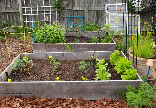 Is Growing Your Own Backyard Garden Worth It?  Gardening Is A Great Way To