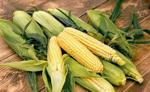 Frugal Vegetables Your Grandma Used to Grow in Her Garden- Corn. | #backyardGarden #saveMoney #frugal #growYourOwn #vegetables #frugalLiving #moneySaving #moneySavingTips #gardening #garden