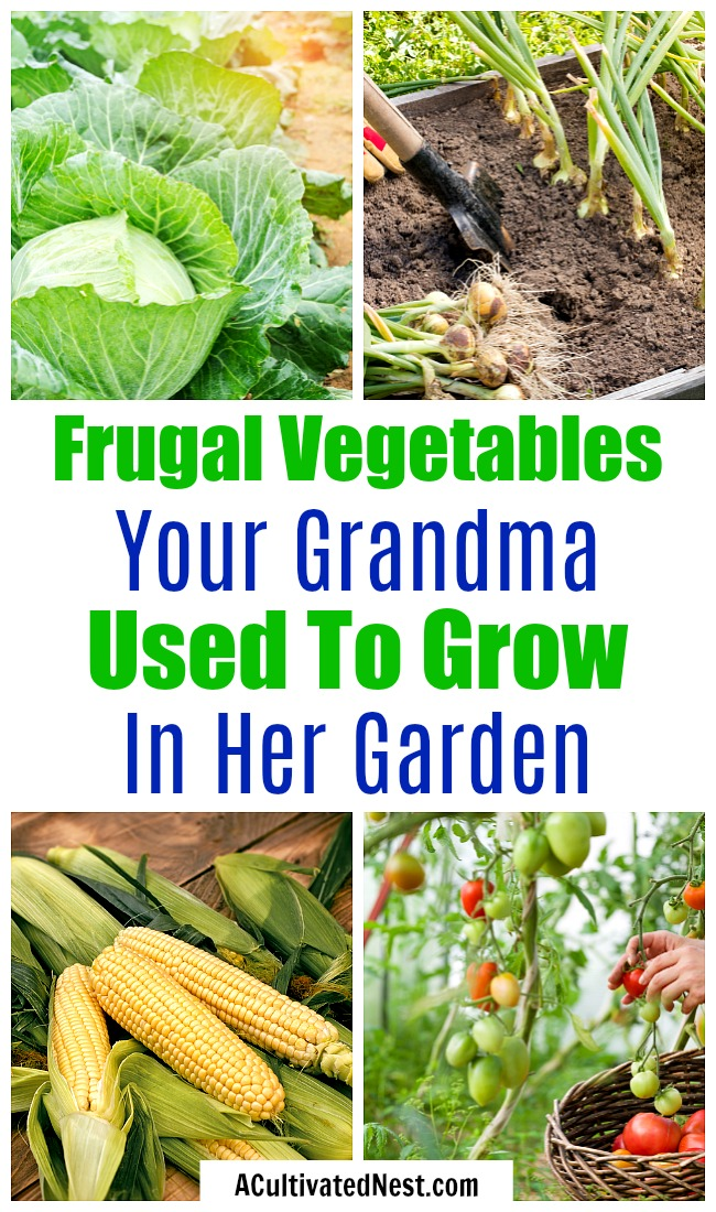 Frugal Vegetables Your Grandma Used to Grow in Her Garden- If you want to save money on food, you should start a garden. But to save the most money, you need to know what frugal vegetables to grow! | #gardening #saveMoney #frugalLiving #growYourOwn #vegetables #frugal #moneySaving #moneySavingTips #backyardGarden #garden