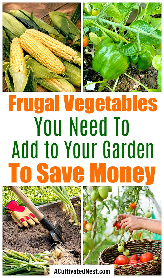 Frugal Vegetables Your Grandma Used to Grow in Her Garden- An easy way to save money on groceries is to grow your own food in a garden. But to save the most money, you need to know what frugal vegetables to grow! | #backyardGarden #saveMoney #frugal #growYourOwn #vegetables #frugalLiving #moneySaving #moneySavingTips #gardening #garden