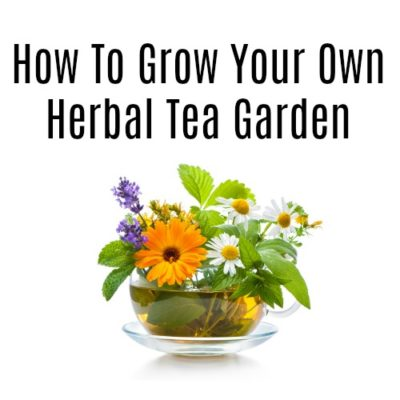 How To Grow An Herbal Tea Garden