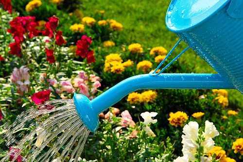 16 Ways to Save Money on Your Water Bill- Watering flowers. | #waterBill #water #frugal #moneySavingTips #moneySaving #saveMoney #waysToSaveMoney #frugalLiving #reduceWaterUsage #utilities