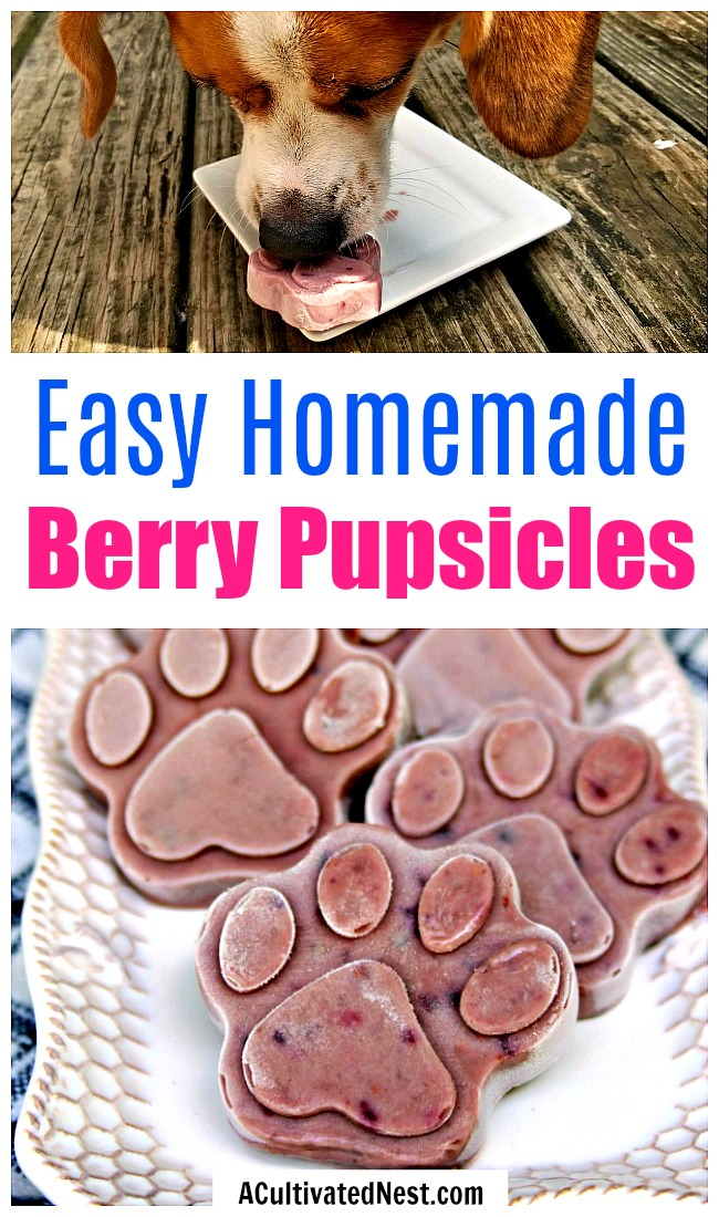 Frozen Dog Treats: Peanut Butter Berry Pops- It's easy to make your own delicious and healthy frozen dog treats! These homemade dog pops contain peanut butter and antioxidant rich berries! | frosty dog treat copycat, pupsicle, dog pop, homemade dog treat recipe #recipe #dog #dogTreat #puppy #popsicle #homemade #DIY