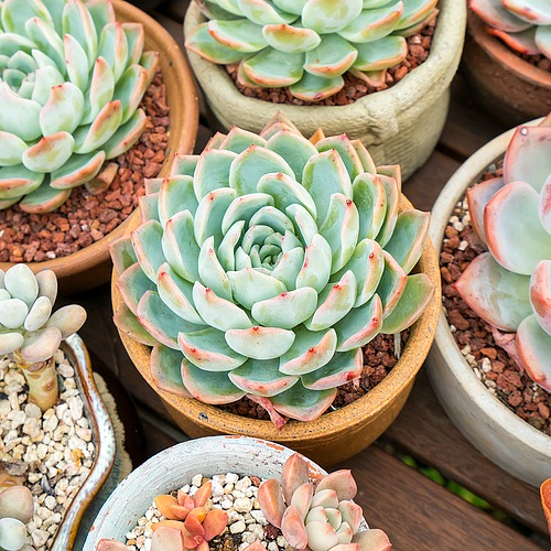 How To Keep Your Succulents Alive- Want to learn how to not kill your succulents? These handy tips on how to keep your succulents alive are the perfect beginner's guide to succulent care! | how to take care of succulents, how to grow succulents, how to propagate succulents, how to decorate with succulents, #succulents #indoorPlants #indoorGardening #gardeningTips