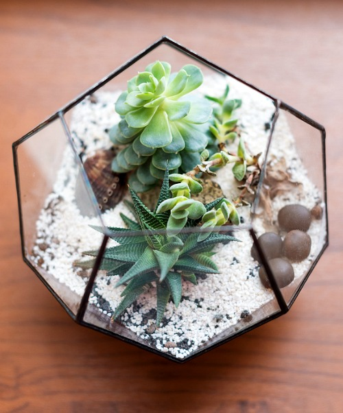 How to Care for Succulents- Want to learn how not to kill your succulents? These handy tips on how to keep your succulents alive are the perfect beginner's guide to succulent care! | how to take care of succulents, how to grow succulents, how to propagate succulents, how to decorate with succulents, #succulents #indoorPlants #indoorGardening #gardeningTips
