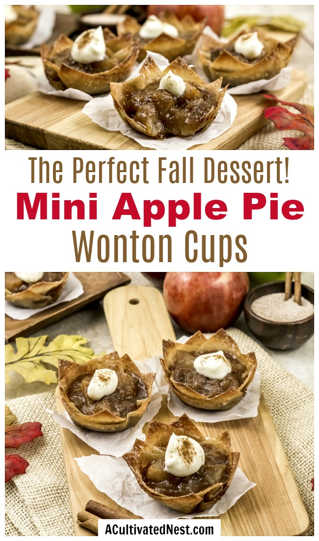 Mini Apple Pie Wonton Cups- If you're looking for the perfect fall dessert, you have to make these mini apple pie wonton cups! They're easy to make, and taste so delicious! They'd also make a great party appetizer! | what to make with extra wonton wrappers, use up extra wonton wrappers, #dessert #recipe #baking #applePie #appetizer #food #fall #autumn #apples #wontonWrappers #ACultivatedNest