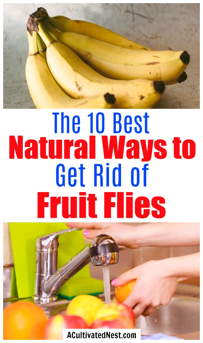 10 Natural Ways to Get Rid of Fruit Flies- There's no need to resort to using chemicals to end a fruit fly infestation. Instead, try some of these 10 effective natural ways to get rid of fruit flies! | #fruitFlies #cleaningTips #hacks #ACultivatedNest