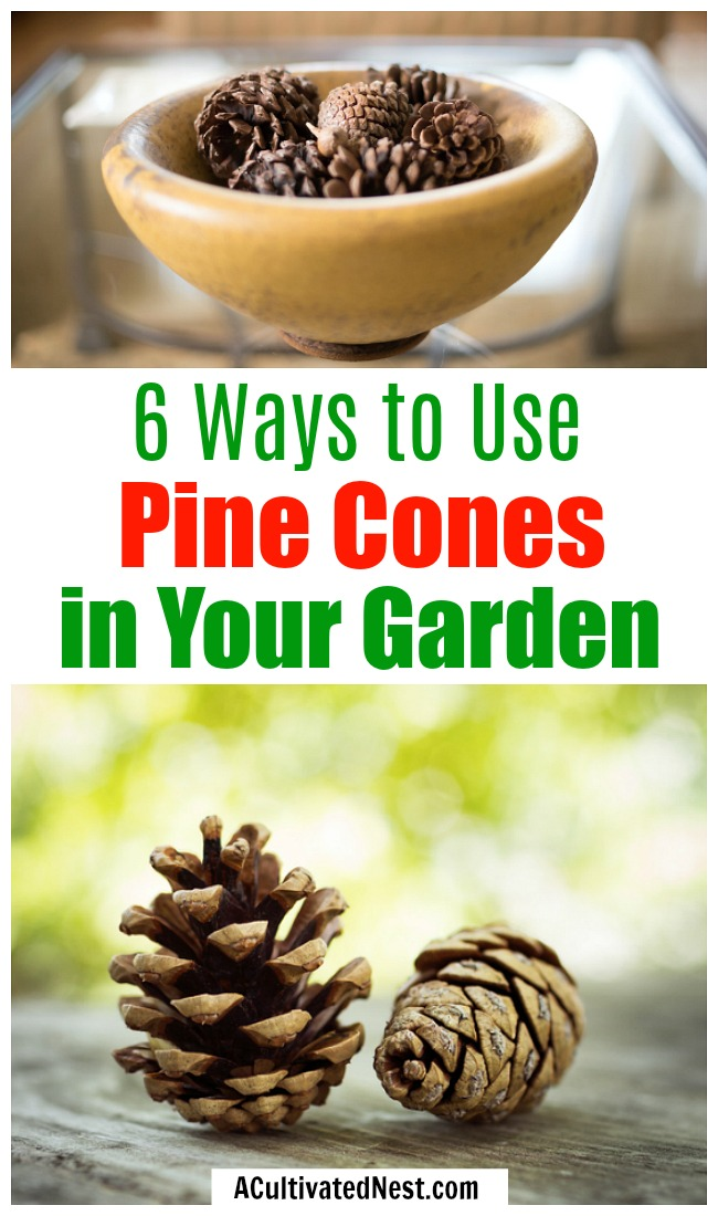 6 Ways to Use Pine Cones in Your Garden- If you're a gardener, don't ignore the pine cones in your yard! They can actually be really helpful in your garden! Here are 7 clever ways to use pine cones in your garden that you need to try! | gardening hacks, frugal gardening, what to do with pine cones, #gardeningTips #gardening #garden #ACultivatedNest