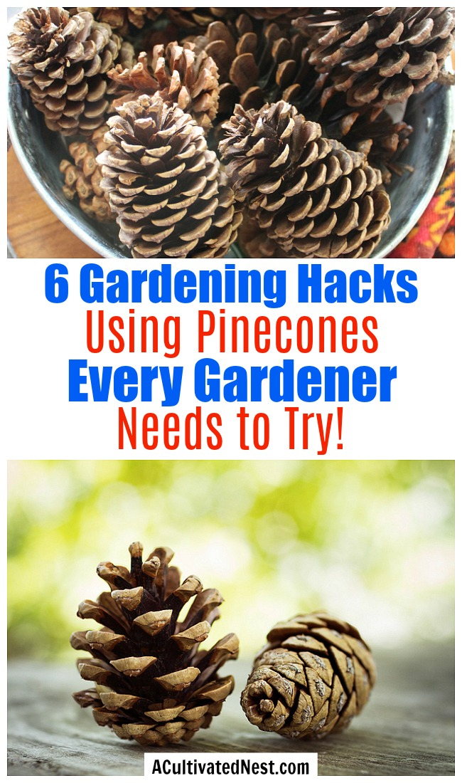 6 Ways to Use Pine Cones in Your Garden