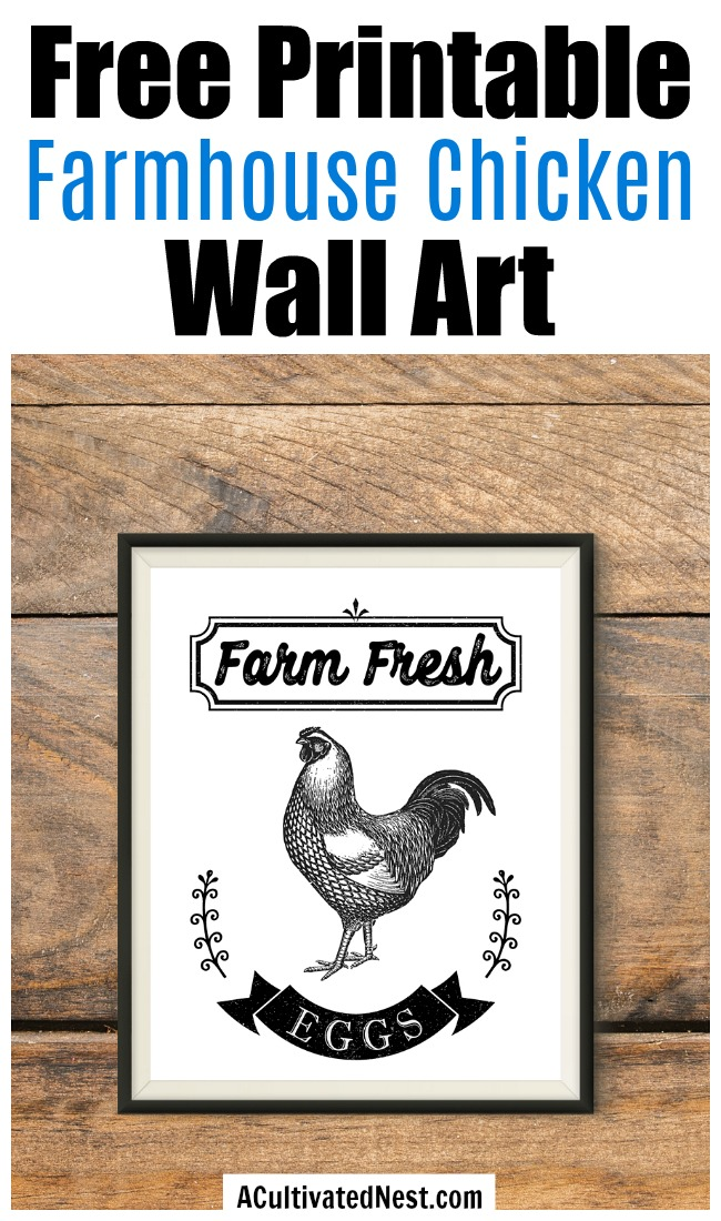 Free Printable Farmhouse Chicken Wall Art- If you want to add a touch of farmhouse style decor to your home, you need to get this free printable farmhouse chicken wall art! This Farm Fresh Eggs wall art free printable would look especially lovely in your kitchen!   farmhouse decor wall art, farm animal wall art,#freePrintable #freePrintables #farmhouseDecor #ACultivatedNest